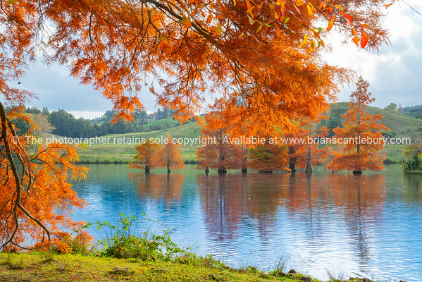Late afternoon autumn colours over lake.