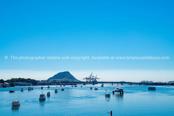 Tauranga harbour (3 of 19)