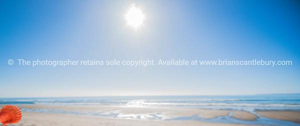 Papamoa Beach. Sun sand and bright sea shell.