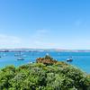 View across Tauranga harbour from base of Mount Maunganui across pohutukawa tree.