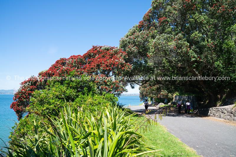 Track through pohutukawa trees on base Mount Maunganui
