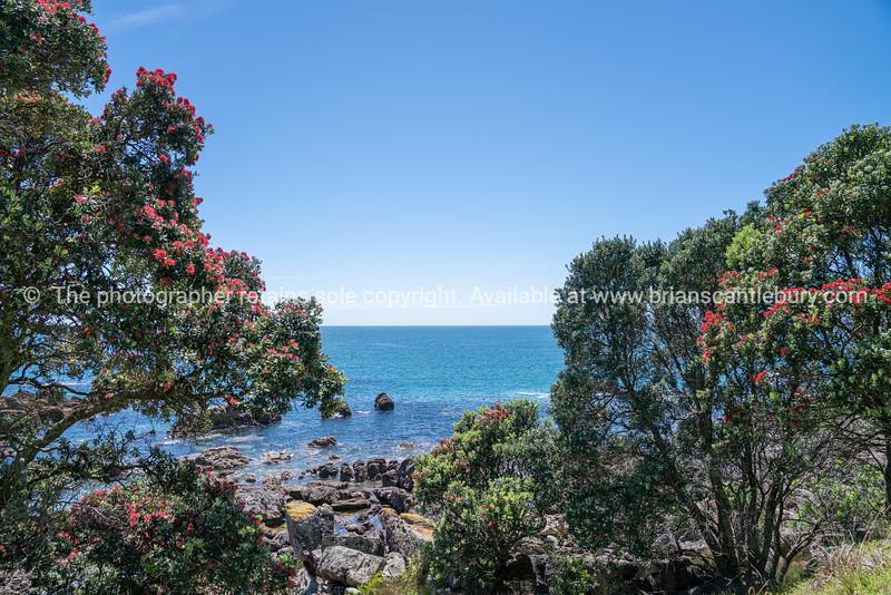View to horizon through in bloom pohutukawa trees
