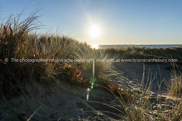 Dune vegetation in silhouette at sunrise