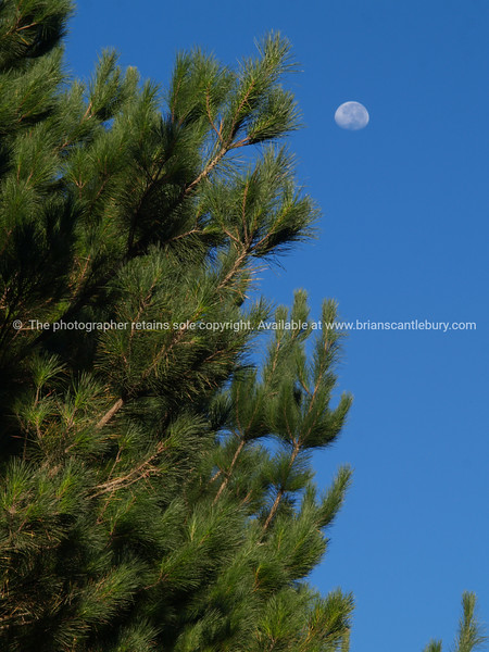 """Tauranga scenics.<br /> <br /> Forestry, Pinus Radiata. Tauranga is New Zealands 5th largest city and offers a wonderfull variety of scenic and cultural experiences. Tauranga stock images Tauranga scenics. See;  <a href=""""http://www.blurb.com/b/3811392-tauranga"""">http://www.blurb.com/b/3811392-tauranga</a> mount maunganui landscape photography, Tauranga Photos; Tauranga photos, Photos of Tauranga Also see; <a href=""""http://www.brianscantlebury.com/Events"""">http://www.brianscantlebury.com/Events</a>"""
