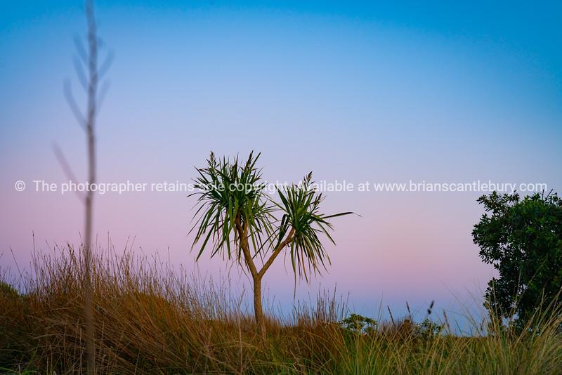 Dune landscape at dawn with beach vegetation