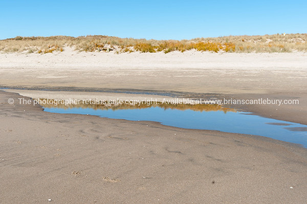 marram grass reflected in tidal puddle on beach.