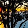 Sun bursts over distant horizon through pohutukawa tree silhouette on lower Mount Maunganui slopes