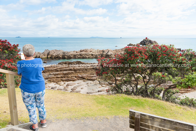 Woman taking photo from Mount Maunganui base track viewframed by red pohutukawa in flower beyond North Rock beacon to Mayor Island on horizon