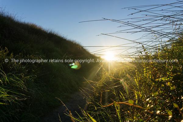 Dune vegetation in silhouette at sunrise