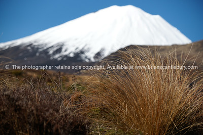 Mount Ngauruhoe beyond alpine vegetation.