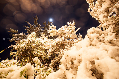 Picturesque night image, snow laden trees