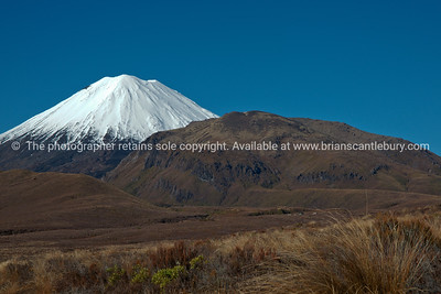Mount Ngauruhoe beyond alpine landscape and vegetation