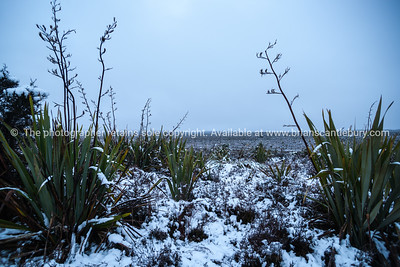Mountain vegetation clad in snow in early winter.