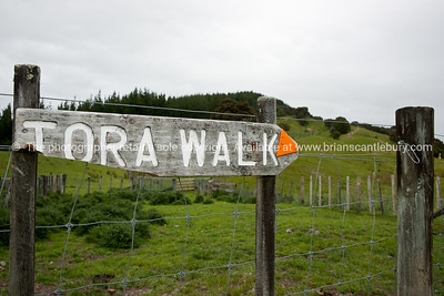 Old sign. Tora Walk. New Zealand Image.