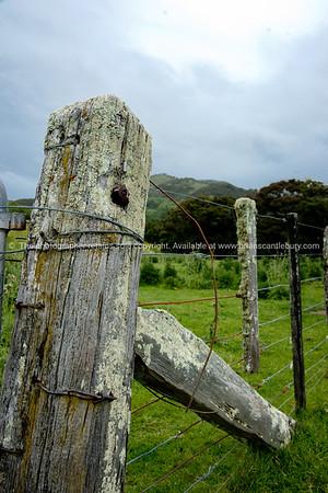 Rustic fence post. Tora. New Zealand Image.
