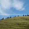 Grassy knoll. New Zealand Image.