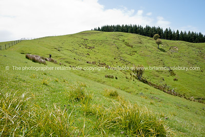 Scenic New Zealand, the Wairarapa back-country, Tora. New Zealand Image