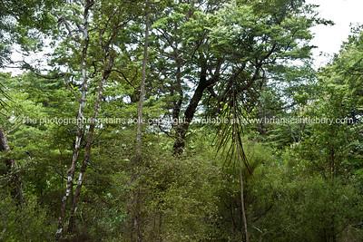 Native bush seen along the Tora walk. New Zealand Image.