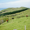 Scenic New Zealand, the Wairarapa coastal farmland. Tora. New Zealand Image