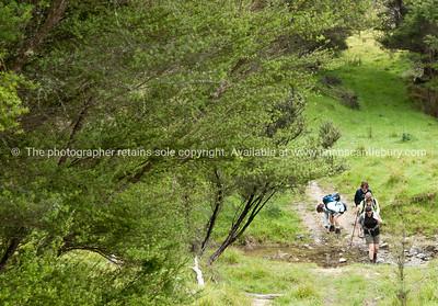 Group on the walk. New Zealand Image.
