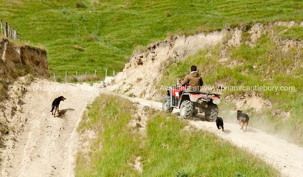 Farmer and dogs Wairarapa back country farmland. New Zealand images.