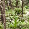 Native bush. New Zealand images.