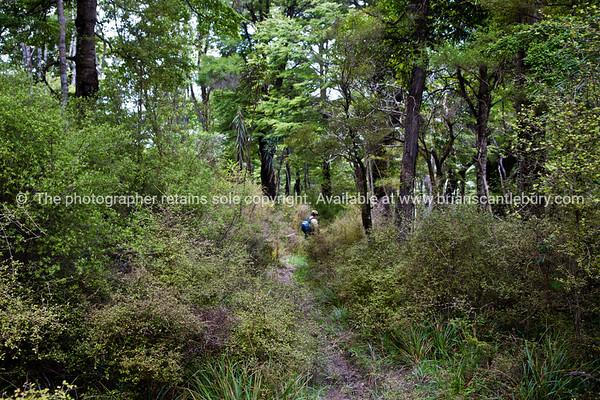 Native bush and beech forest along Tora Walk. New Zealand Image.