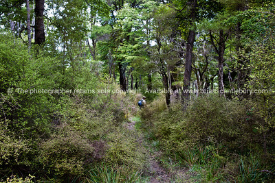 Native bush and beech forest along Tora Walk. New Zealand Image.