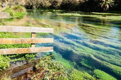Algae and water plants in the scenic Te Waihou River, Waikato.