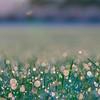 Dew drops on lawn
