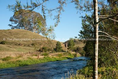 Te waihou River walk-12