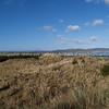 Windswept, North Island's west coast.
