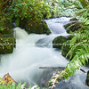 Te Waihou River, Waikato New Zealand.