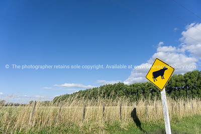 Cattle warning sign on rural road Greytown Wairarapa New Zealand