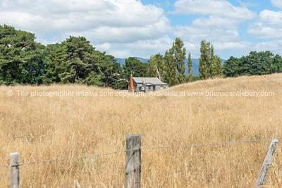 Little old house in golden field