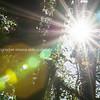 Sun lens flare s against dark backlit bush and trees