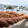 Mooring ropes lying on dock Oriental Bay Boat sheds  and boats across bay Wellington New Zealand