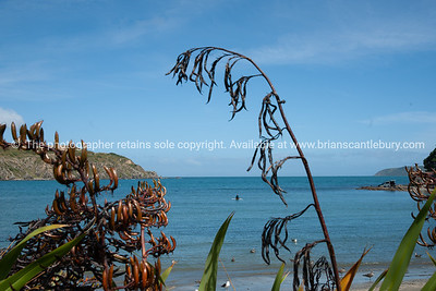 Titahi Bay, Wellington, New Zealand