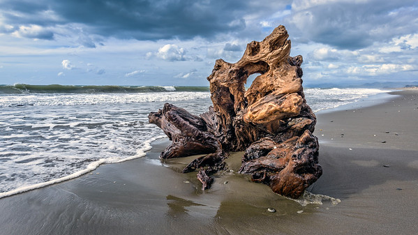 Driftwood, Bay of Plenty
