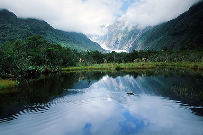 Peter's Pool, Franz Josef Glacier, West Coast, South Island