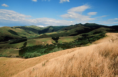 Grassland near Port Jackson, North Island