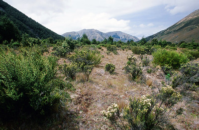 Alpine scrub and tussock grasslands, Arthur's Pass, South Island