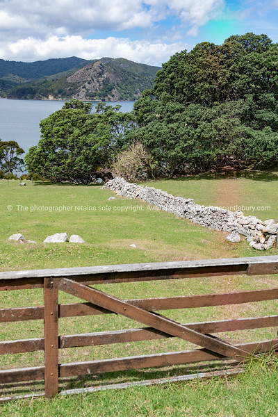 View over farm with dry stone wall and coastal pohutukawa trees to bay below