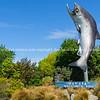 Rakaia welcome salmon