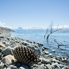 Sticks and gaint pine cone in calm water on stony shore of Lake Pukaki.