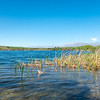 Water's edge of Lake Alexandrina in Canterbury with bull rushes