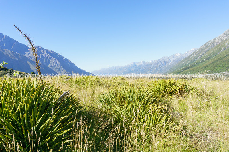 Valley of flax between two converging ranges in Southern Alps.