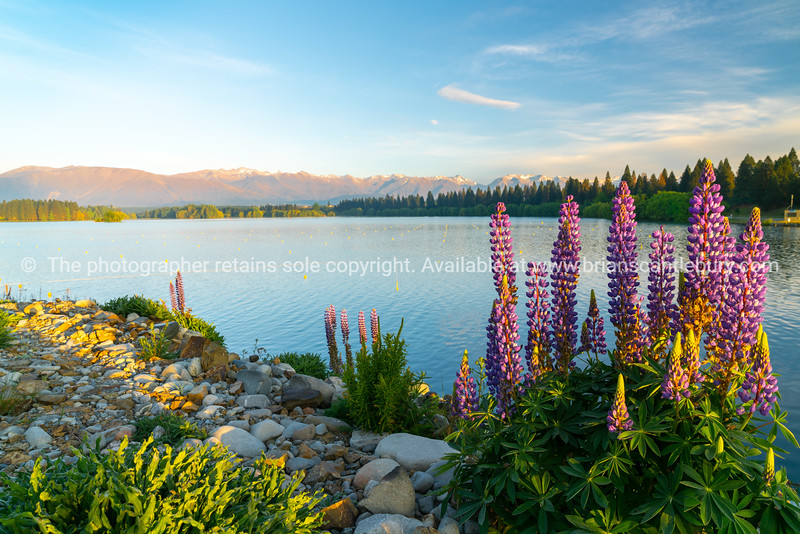 The golden hour over Lake Ruataniwha, Twizel.
