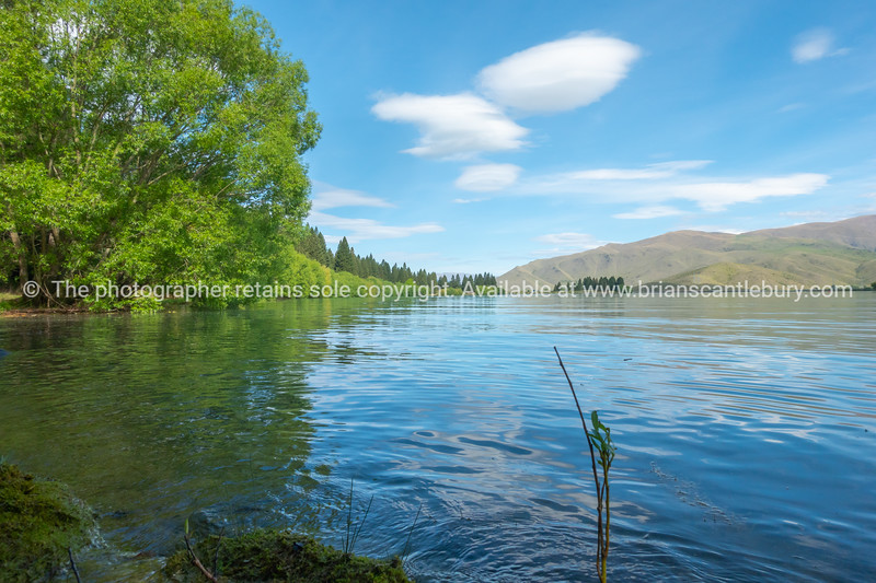 Lake Ruataniwha edge with lime green spring growth on willow trees