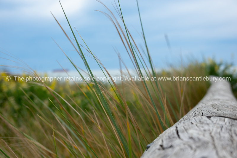 Old driftwood log lying in beach vegetation